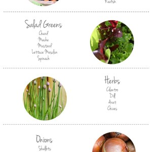 22 Crops to Grow in the Tiniest Garden
