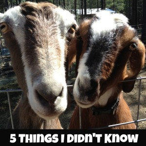 5 Tips You Didn't Know About Having Goats
