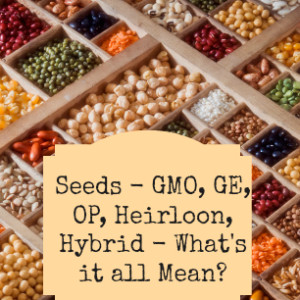 Garden Seeds – GMO, GE, OP, Heirloom, Hybrid – What's It All Mean?