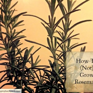How (Not) To Grow Rosemary