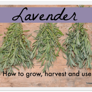 How to Grow, Harvest, and Dry Lavender