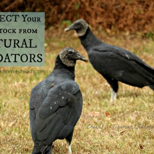 How to Protect Livestock from Wildlife