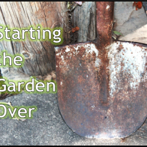 Starting Over in the Garden