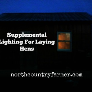 Supplemental Lighting For Homestead Laying Hens