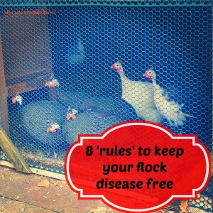 Keeping your flock disease free: The 8 rules