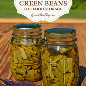 Canning String Beans for Food Storage