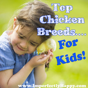 Chicken Breeds for Kids