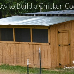 How to Build a Chicken Coop Part 2