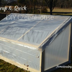 The Greenhouse that Jeremy Built