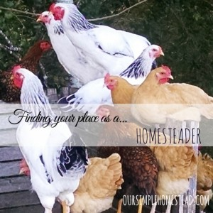 Finding Your Place as a Homesteader