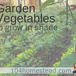 Planning a Vegetable Garden in Shade