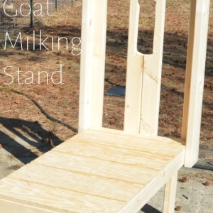 A Goat Milking Stand that Jeremy Built