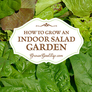 How to Grow an Indoor Salad Garden