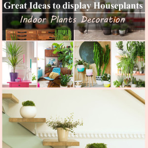 99 Great Ideas to display Houseplants | Indoor Plants Decoration