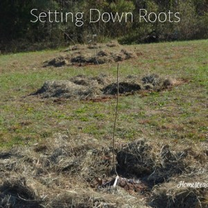 How to Plant Apple Trees in the South