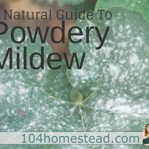 A Natural Guide to Powdery Mildew Treatment