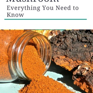 How to Find, Harvest, and Process Chaga Mushroom Sustainably