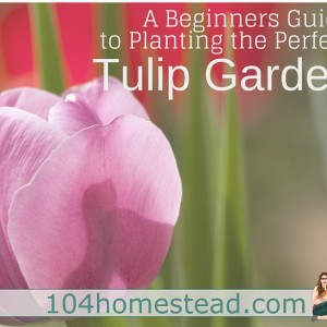 A Beginner's Guide to Planting the Perfect Tulip Garden