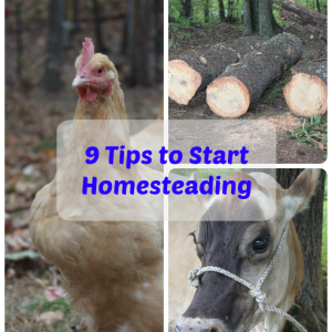 9 Tips to Start Homesteading