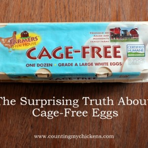 The Surprising Truth About Cage-Free Eggs