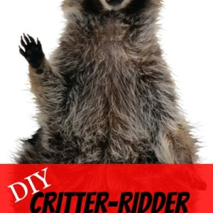 Rodent Repellent: DIY Critter-Ridder Recipe