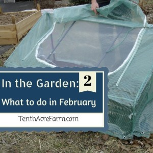 In the Garden: What to do in February