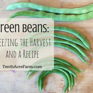 Green Beans: Freezing the Harvest and a Recipe