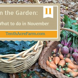 In the Garden: What to do in November