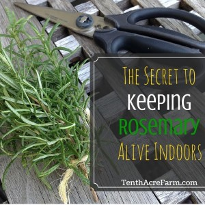 How to Keep Rosemary in a Pot