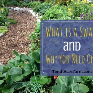 What is a Swale and Why You Need One