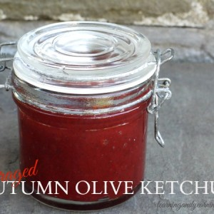 Foraging: Autumn Olive Ketchup