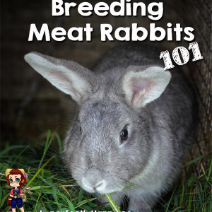 Breeding Meat Rabbits 101