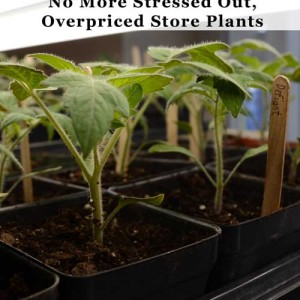 Grow Tomatoes from Seed – Save Money, Get More Varieties