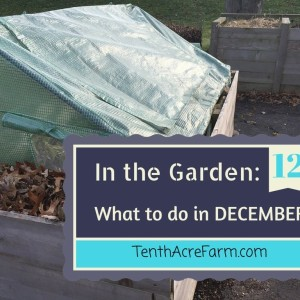 In the Garden: What to do in December