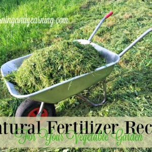5 Natural Fertilizer Recipes For Your Vegetable Garden