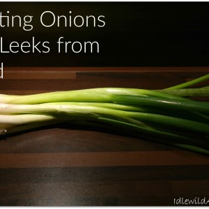 Planting Onions and Leeks from Seed