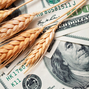 Finance 101 for Homesteaders