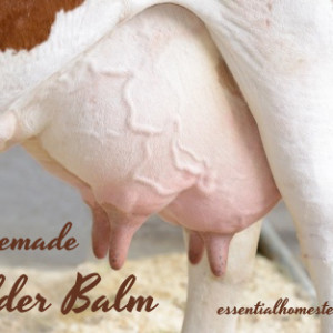 Homestead Udder Balm