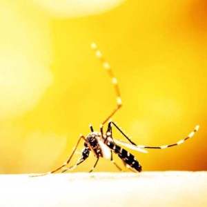 Zika Virus – What You Need to Know