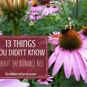 13 Things You Didn't Know about the Bumble Bee