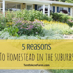 5 Reasons to Homestead in the Suburbs