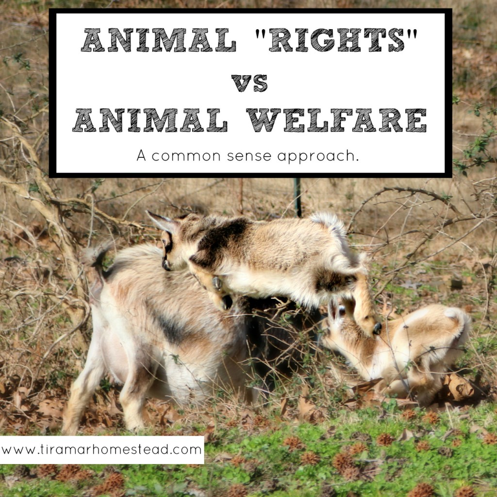 animal welfare vs animal rights The difference between animal rights and animal welfare has been summed up like this: animal rights advocates are campaigning for no cages, while animal welfarists are campaigning for bigger cages.