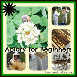 Apiary for Beginners: Part II