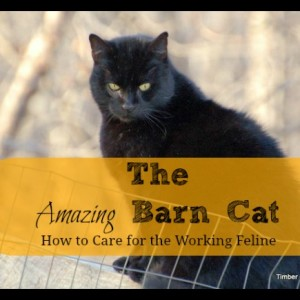 Barn Cats- How to Care for the Working Feline