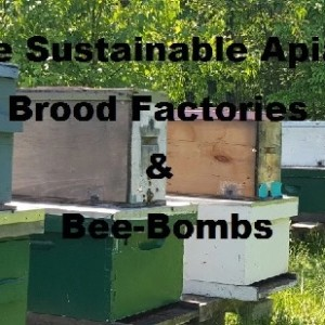 The Sustainable Apiary─Brood-Factories & Bee-Bombs