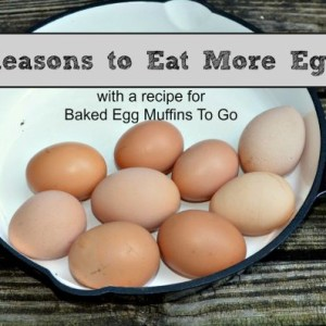 Egg Facts 5 Incredible Reasons to Eat Eggs