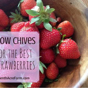 Grow Chives for the Best Strawberries