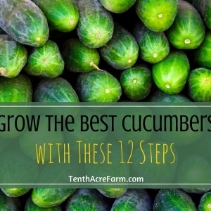 Grow the Best Cucumbers with these 12 Easy Steps