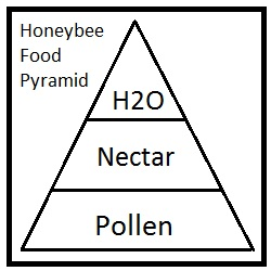 Honeybee Nutrition in Pollens & Nectar
