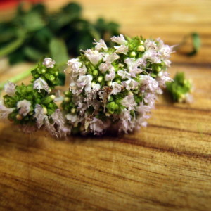 How I use oregano (or is that marjoram?)